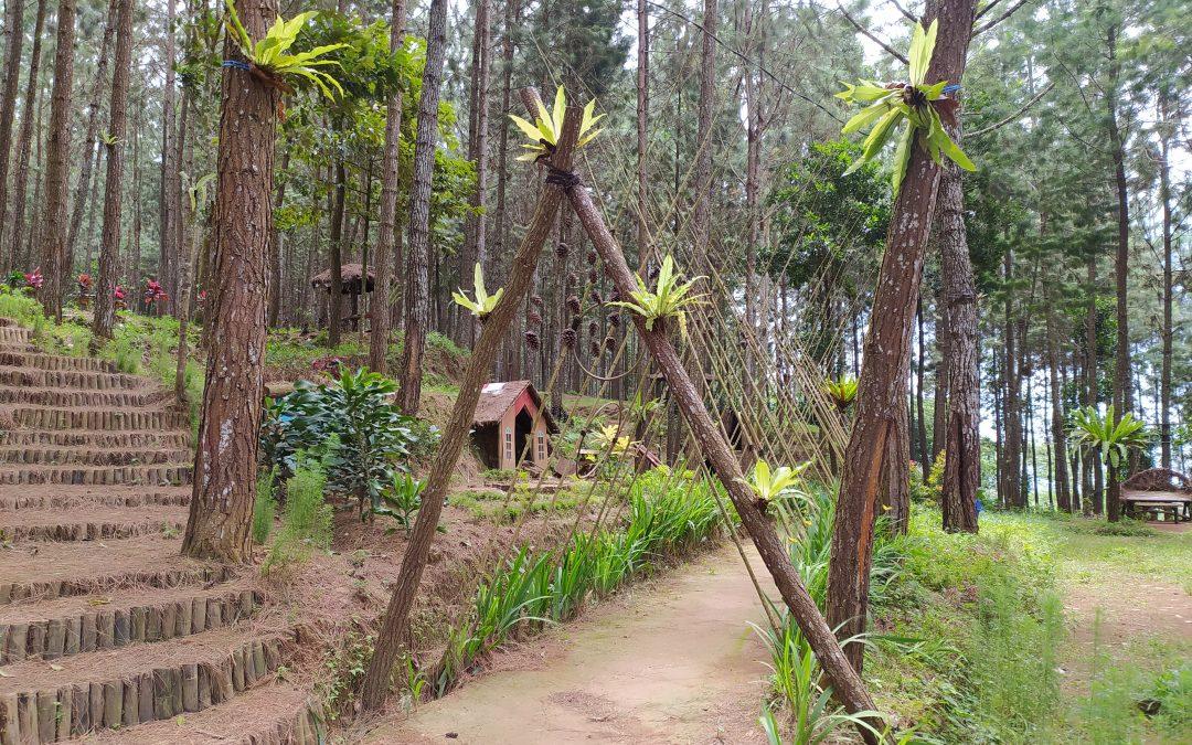 "Nikmatnya Berlibur di Hutan Pinus Buaran ""Bukit Ares Pawininan"""